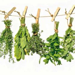Plantas-curativas